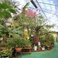 植物展示室