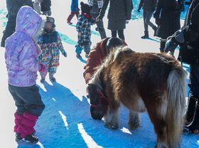 horse_show_winter_info_2019_002.jpg