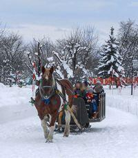 horse_show_winter_info_2019_003.jpg