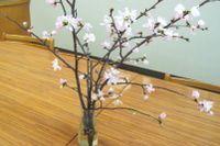 sakura_cut_flowers_2020_002.JPG