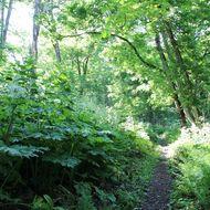 嵐山公園散策路(登山道)