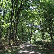 散策路が整備され、環境学習広場駐車場~蘆花寄生木ゆかりの地までは車椅子が利用できます。