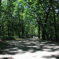 散策路(自然生態観察公園区域園路)