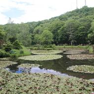 旭山三浦庭園(旧三浦庭園) 平成26年7月5日オープン